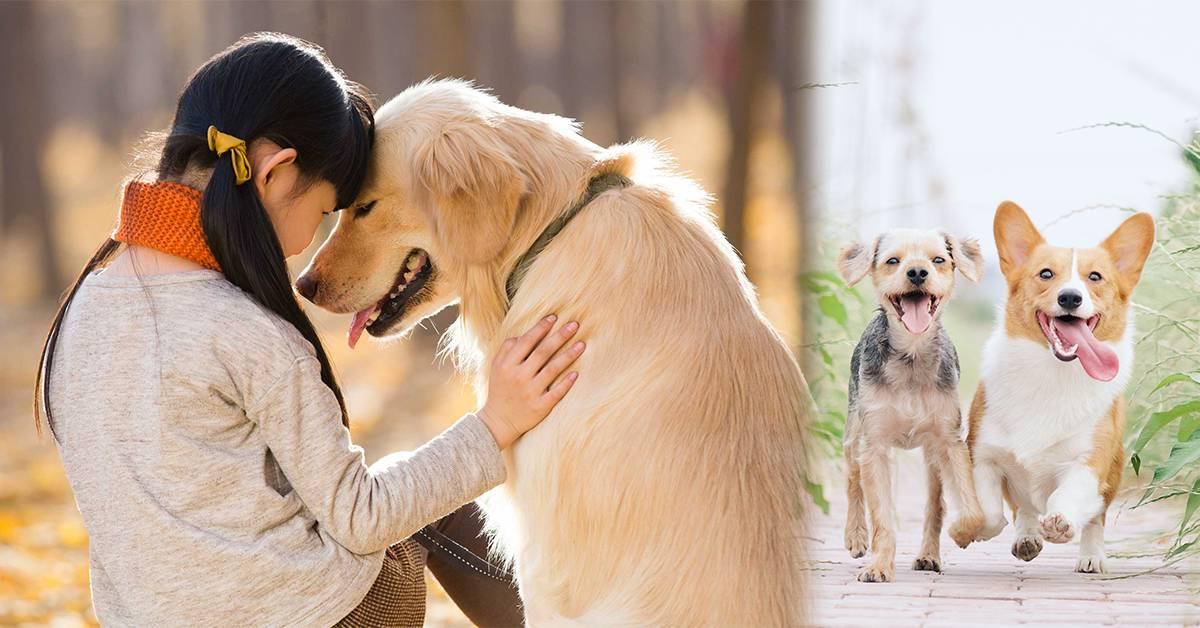 你喜欢小巧可爱还是大型淘气的狗狗呢?看完秒懂饲养两种不同体型狗狗的区别!
