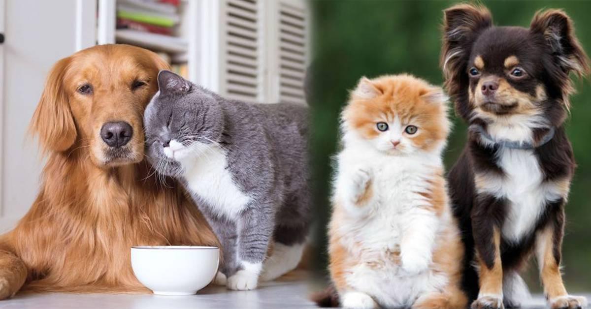 养猫OR养狗?盘点养猫的5个好处!喵星人更能疗愈人类的心灵!