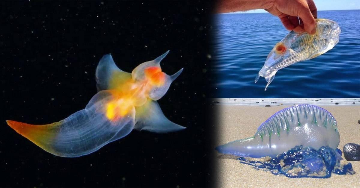 世界某处竟然有这些透明生物? 它们都会隐身术!绝美梦幻蝴蝶让人想拥有它!