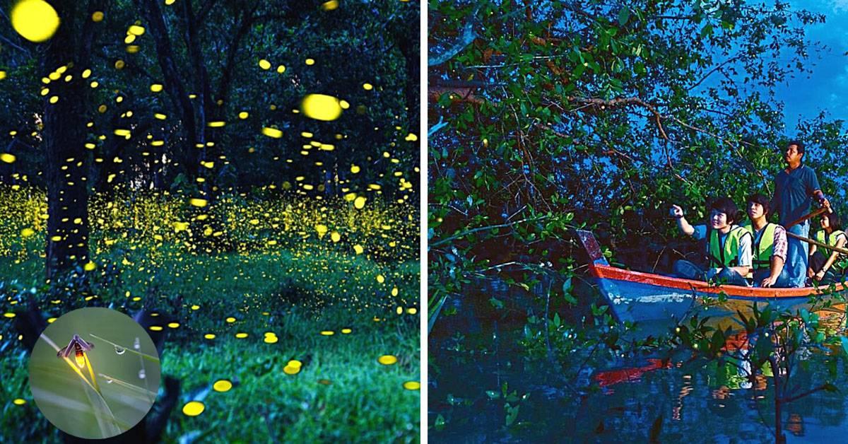 盘点大马8个观看萤火虫的好去处!一起去追踪夜光仙子的身影!