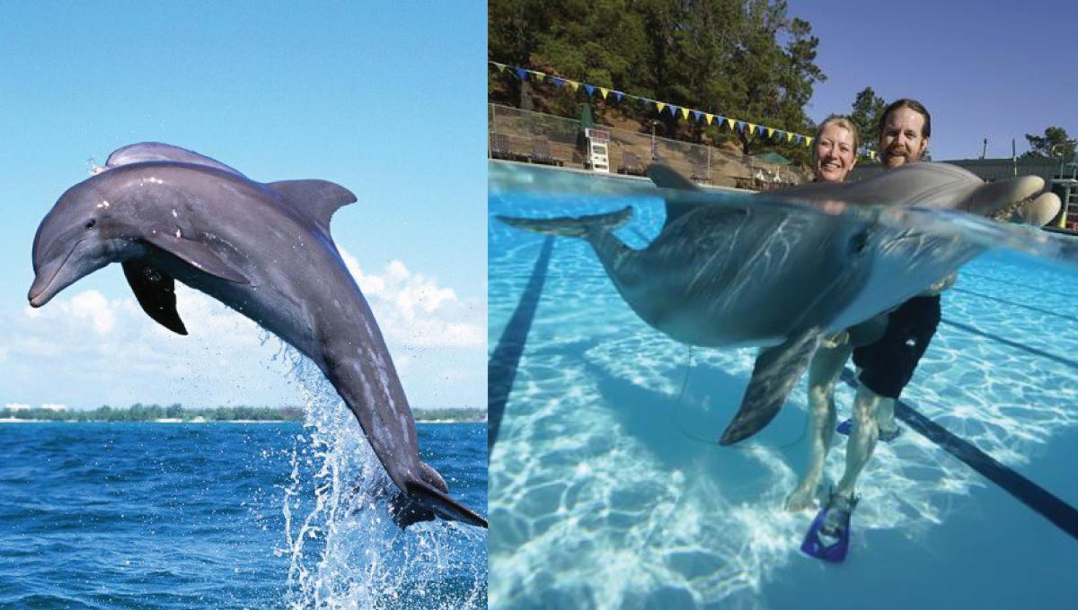 机械海豚正式面世!水族馆圈养的海豚能放生了?!