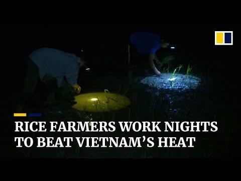 天气太热受不了!越南农民凌晨开始工作!