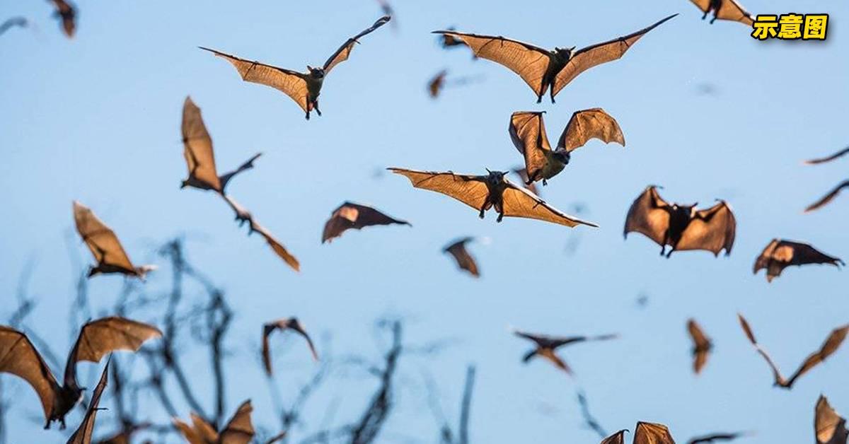 印度出现大批蝙蝠离奇坠地死亡!这两样东西竟是死亡原因!