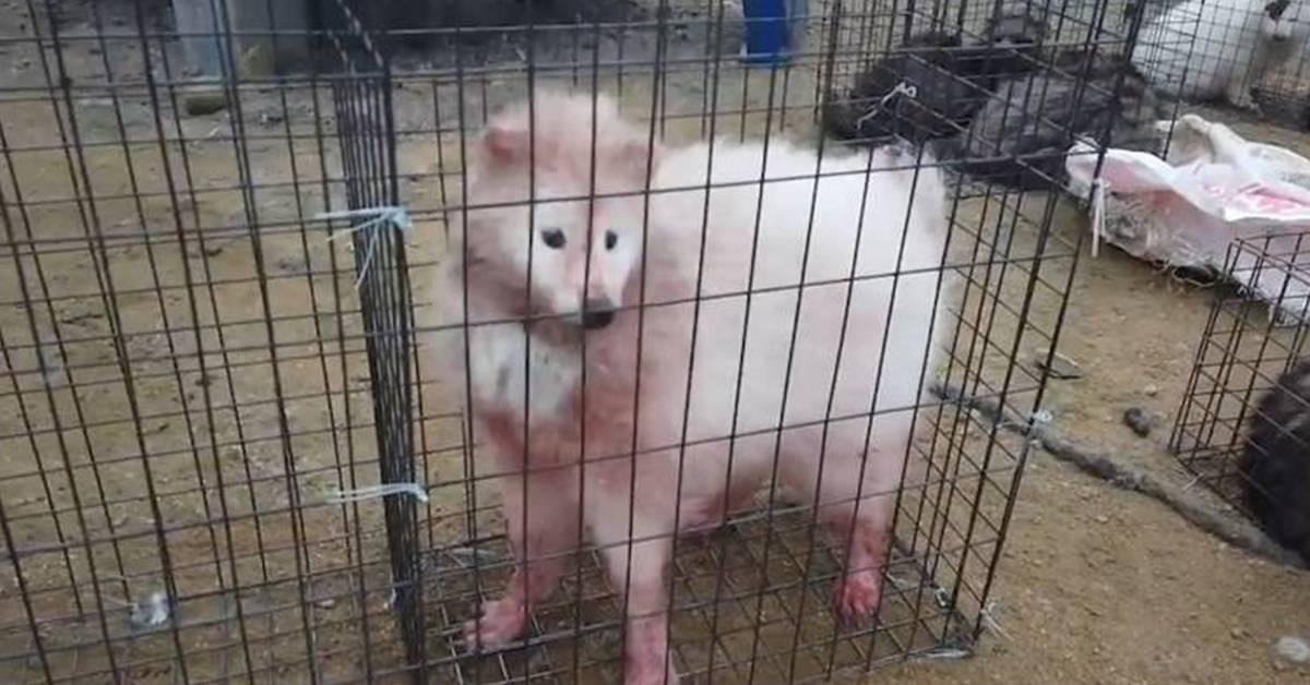 """不要再买毛皮物品了!狐狸被活生生剥皮,毛皮工厂堆积血淋林的""""尸山""""!"""
