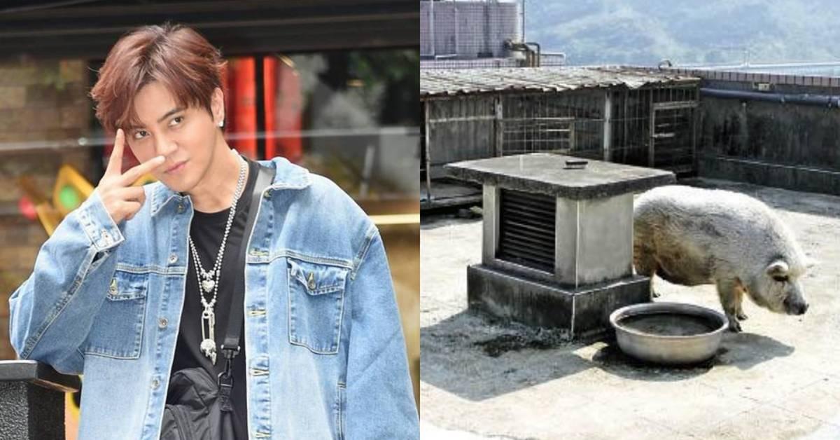 罗志祥曾在顶楼养200斤的猪!满地猪屎,臭味熏天被邻居投诉!