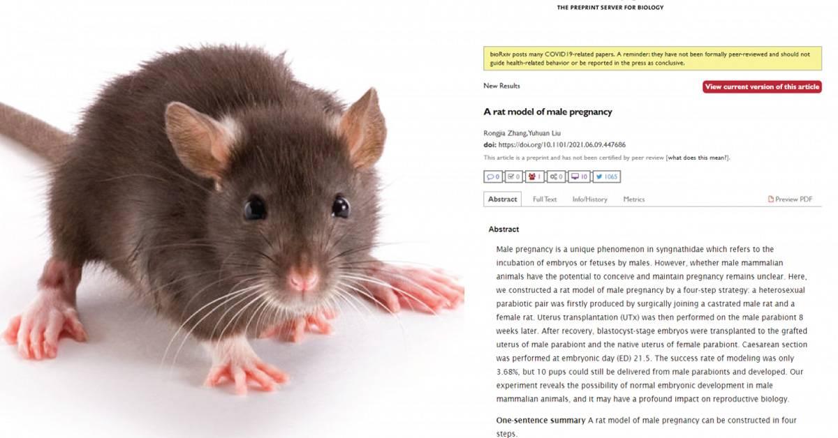 打破自然界规律!科学家成功让公鼠怀孕诞下幼崽!