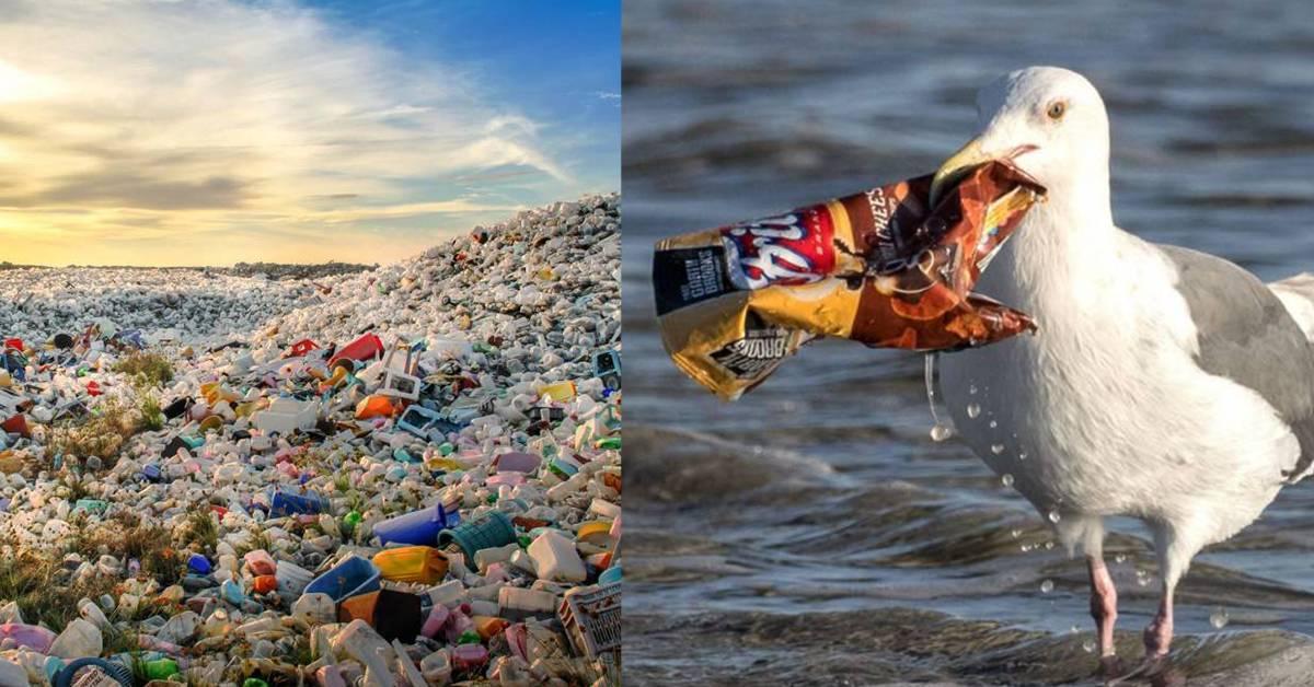 WWF「亚洲最严重的海洋污染者」报告出炉!马来西亚占首位!
