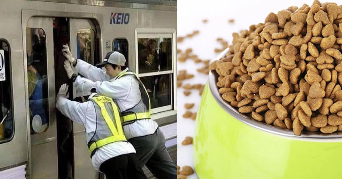 世上6个最奇葩但赚钱的工作!吃狗粮就可赚RM300K?!