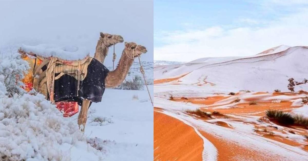 活久见系列!非洲撒哈拉沙漠竟下雪了,沙丘被白雪覆盖!