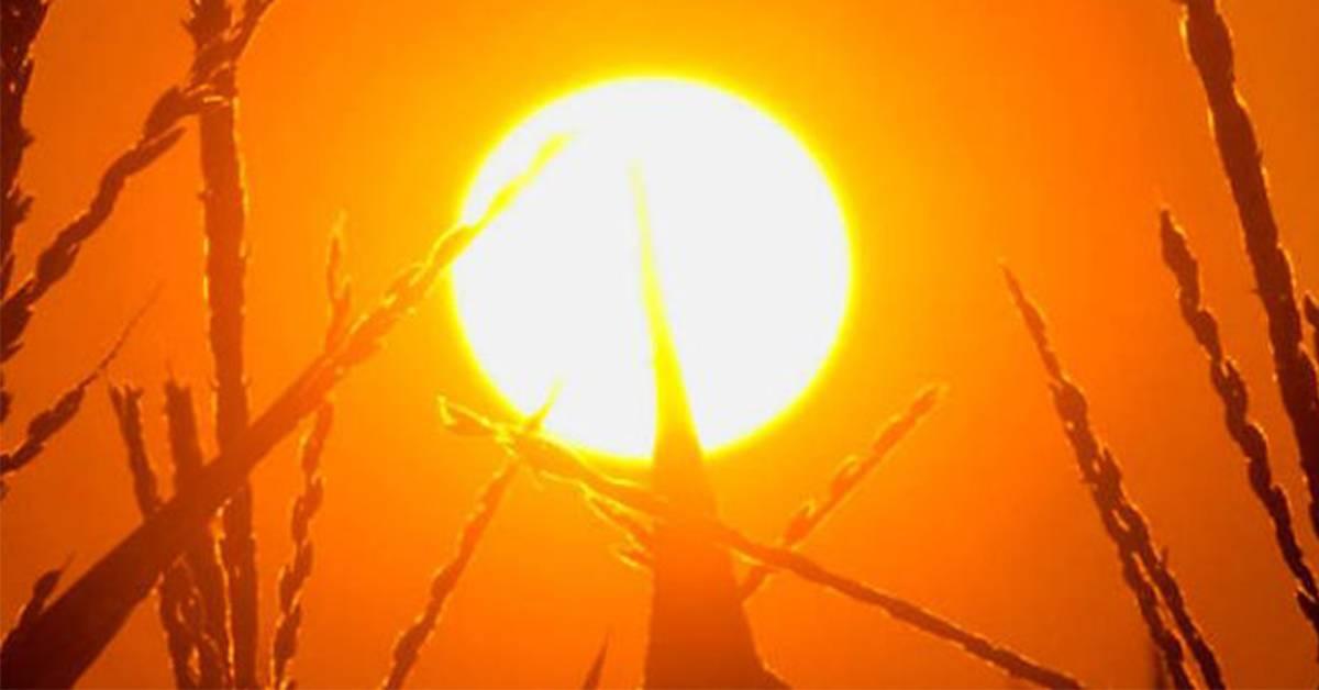 气象局预测大马还要热到3月中旬!这些地区的气温最高!