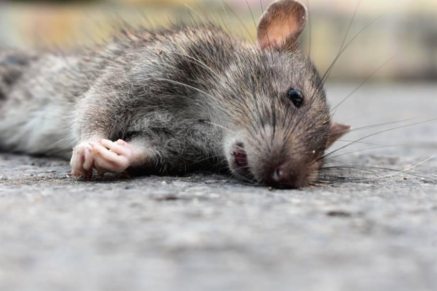 又有另一种病毒爆发了!中国蒙古爆发三级预警鼠疫传播风险!