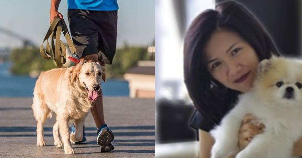 出现首宗宠物被感染新冠型病毒病例!香港政府:未有数据证明会被感染!