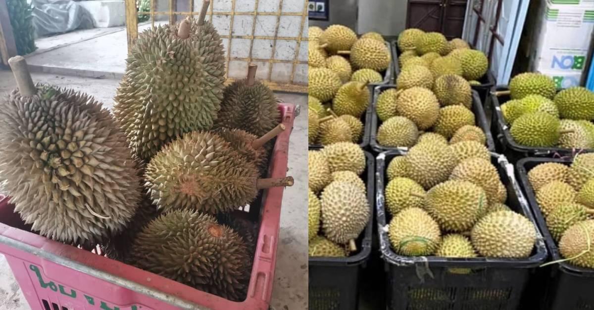 疫情爆发影响榴莲滞销大跌价!每公斤RM1.99引人潮?
