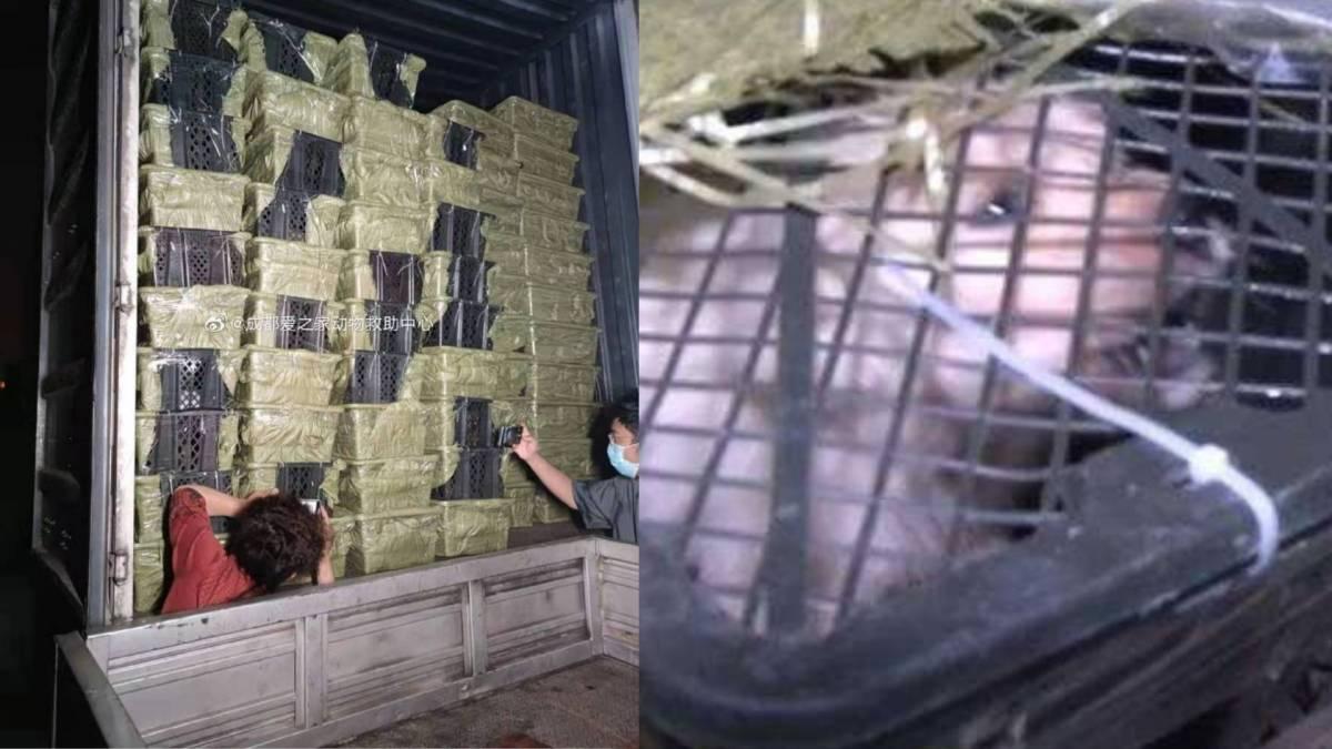 """中国无良业者卖""""宠物盲盒""""!狗猫活活闷死后被随意遗弃!"""
